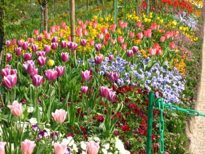 Fleurs XIII