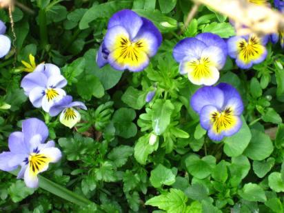 Fleurs XVII