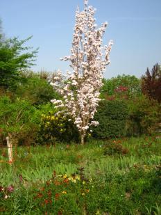 Tree of Flowers