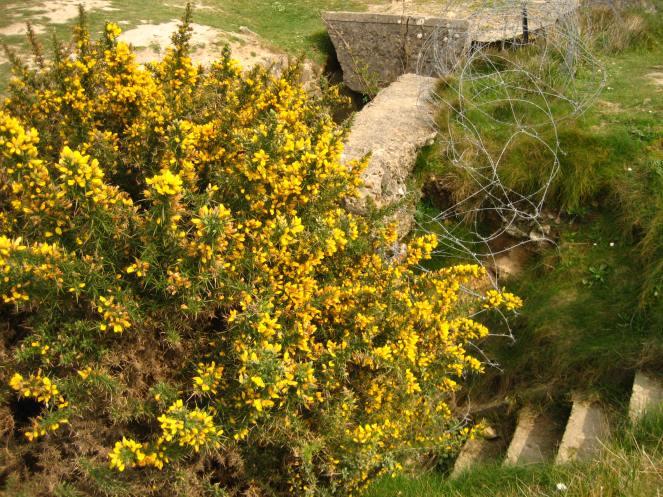 Les fleurs jaunes II